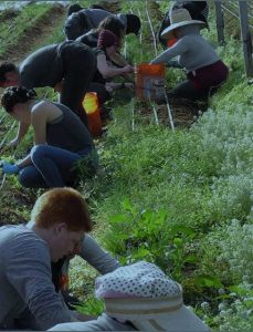 students farming--ENVI 25 Sustainable Agriculture in California (WS 2019 travel course)